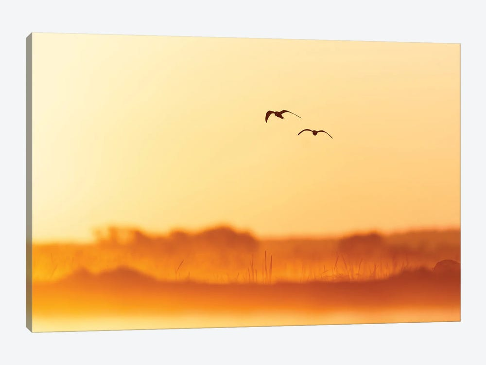 Golden Morning by Mateusz Piesiak 1-piece Canvas Art