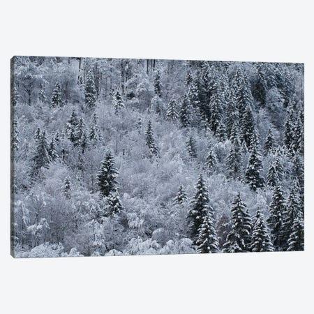Winter Canvas Print #MTU227} by Mateusz Piesiak Art Print