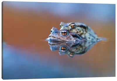 Toads' Love Canvas Art Print