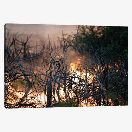 Mangroves At Sunrise Canvas Print #MTU25} by Mateusz Piesiak Canvas Artwork