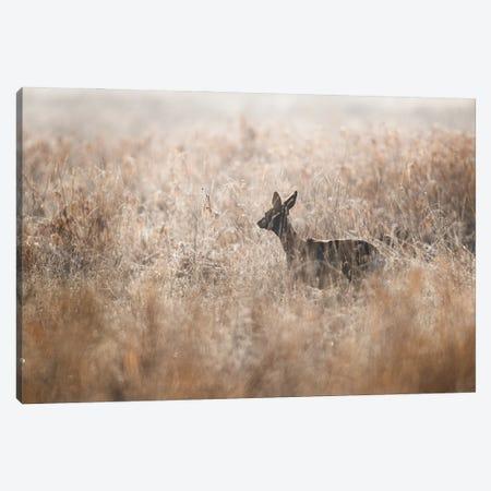 Roe Deer Canvas Print #MTU29} by Mateusz Piesiak Canvas Art Print