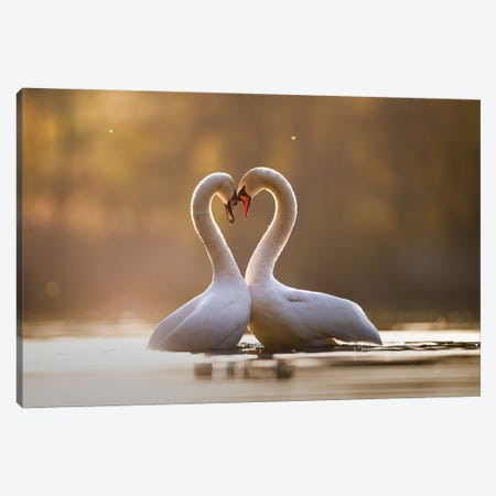Love Is In The Air Canvas Print #MTU37} by Mateusz Piesiak Canvas Print