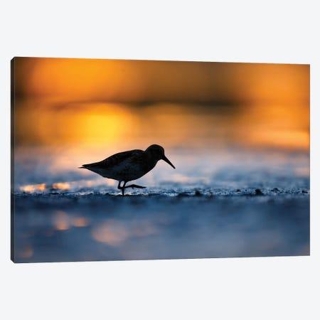 At Sunset Canvas Print #MTU42} by Mateusz Piesiak Art Print