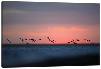 Before The Sunrise Canvas Art Print