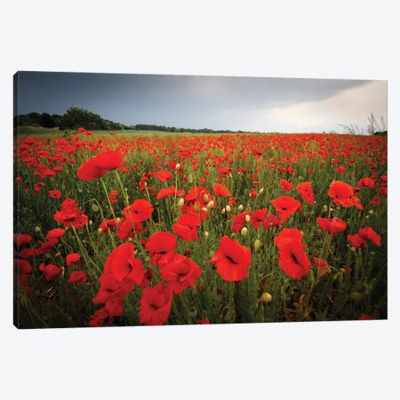 Poppies Field Canvas Print #MTU47} by Mateusz Piesiak Canvas Art
