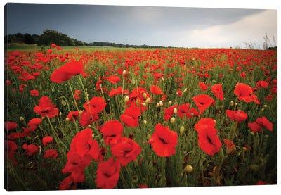 Poppies Field Canvas Art Print