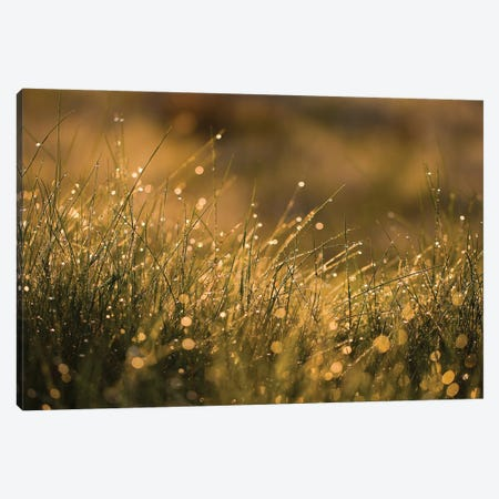 Morning Dew I Canvas Print #MTU4} by Mateusz Piesiak Art Print