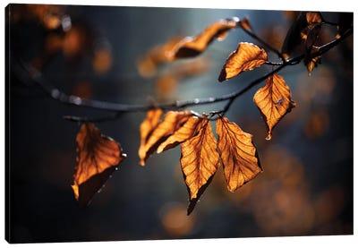 Autumn Leaves Canvas Art Print