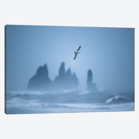 Free As A Bird Canvas Print #MTU60} by Mateusz Piesiak Canvas Print