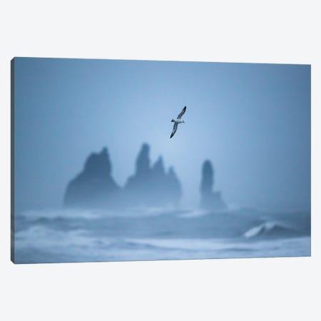 Free As A Bird Canvas Print #MTU60} by Mateusz Piesiak Canvas Print