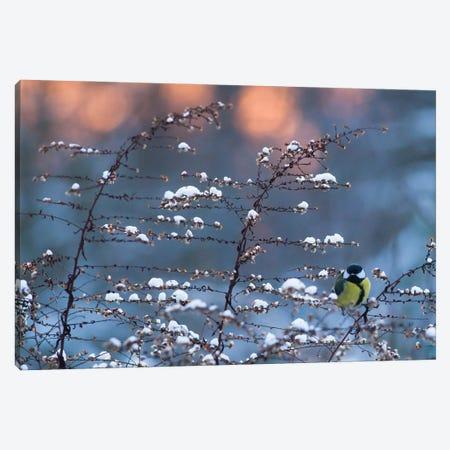 Winter Time Canvas Print #MTU65} by Mateusz Piesiak Canvas Art