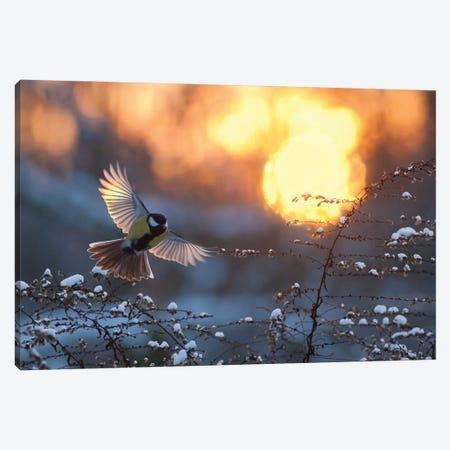 Landing At Sunset Canvas Print #MTU79} by Mateusz Piesiak Canvas Artwork