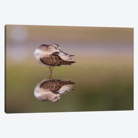 Preening Time Canvas Print #MTU84} by Mateusz Piesiak Canvas Art