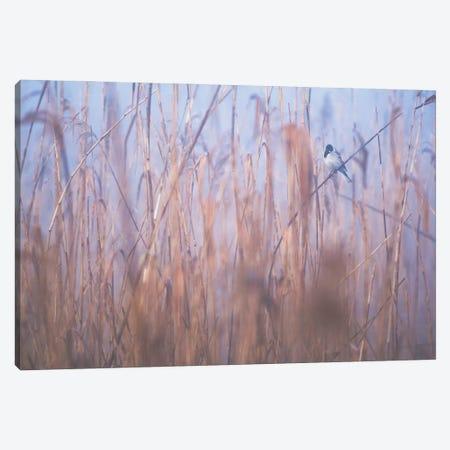 In The Reeds III Canvas Print #MTU87} by Mateusz Piesiak Canvas Art