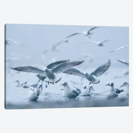 Gulls In The Fog Canvas Print #MTU90} by Mateusz Piesiak Canvas Artwork