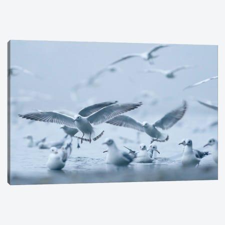 Gulls In The Fog Canvas Print #MTU90} by Mateusz Piesiak Canvas Artwork