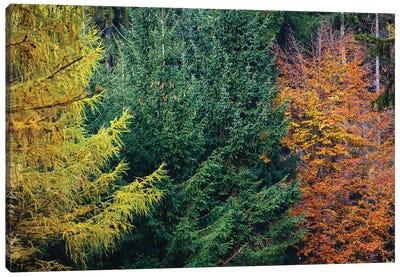 Autumn Colors Canvas Art Print
