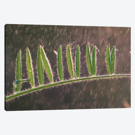 Summer Rain Canvas Print #MTU9} by Mateusz Piesiak Canvas Wall Art