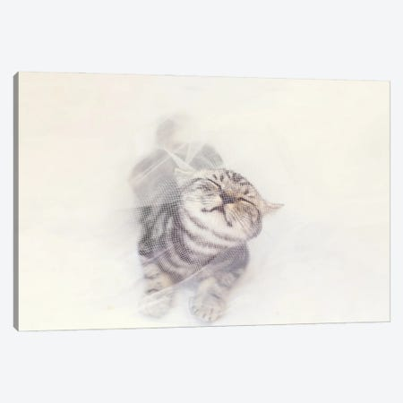 British Shorthair Canvas Print #MTV87} by Milica Tepavac Canvas Art Print
