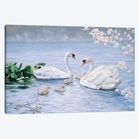 Proud Swan Family Canvas Print #MTZ36} by Peter Motz Canvas Wall Art