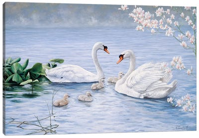 Proud Swan Family Canvas Art Print