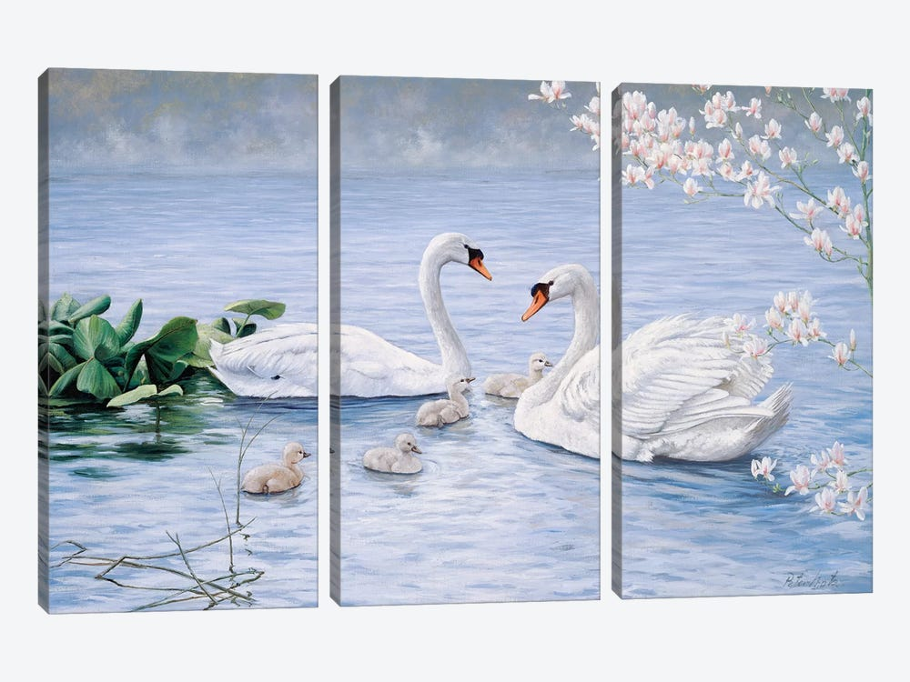 Proud Swan Family by Peter Motz 3-piece Canvas Print
