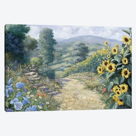 Along The Sunflowers Canvas Print #MTZ3} by Peter Motz Canvas Art Print