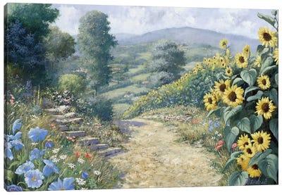 Along The Sunflowers Canvas Art Print