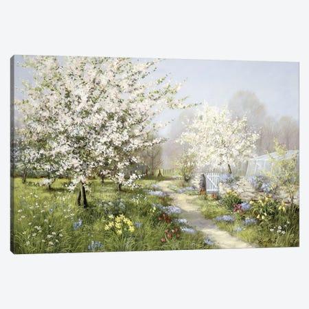 Spring Blossoms Canvas Print #MTZ44} by Peter Motz Canvas Print