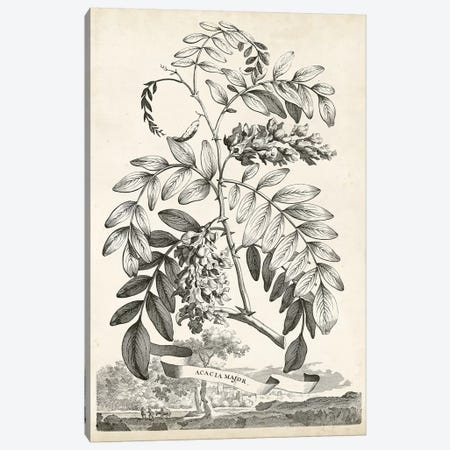 Scenic Botanical I Canvas Print #MUN1} by Abraham Munting Canvas Art Print