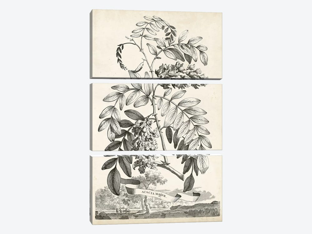 Scenic Botanical I by Abraham Munting 3-piece Canvas Artwork