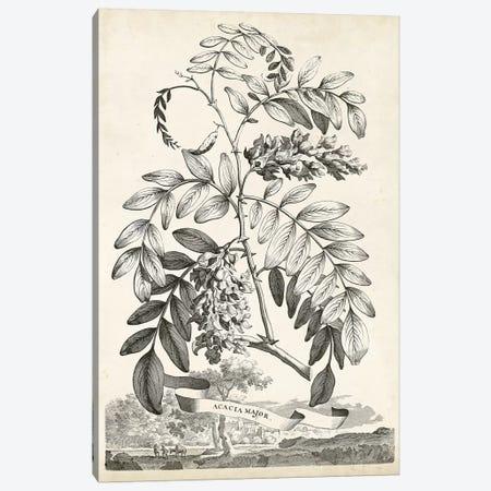 Scenic Botanical I Canvas Print #MUN1} by Abraham Munting Canvas Art Print