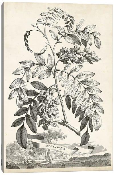 Scenic Botanical I Canvas Art Print