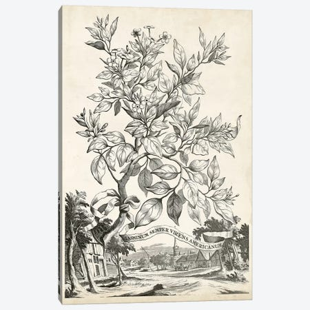 Scenic Botanical II 3-Piece Canvas #MUN2} by Abraham Munting Canvas Print
