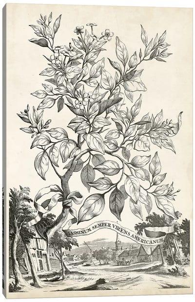 Scenic Botanical II Canvas Art Print
