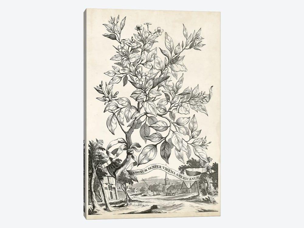 Scenic Botanical II by Abraham Munting 1-piece Canvas Art Print