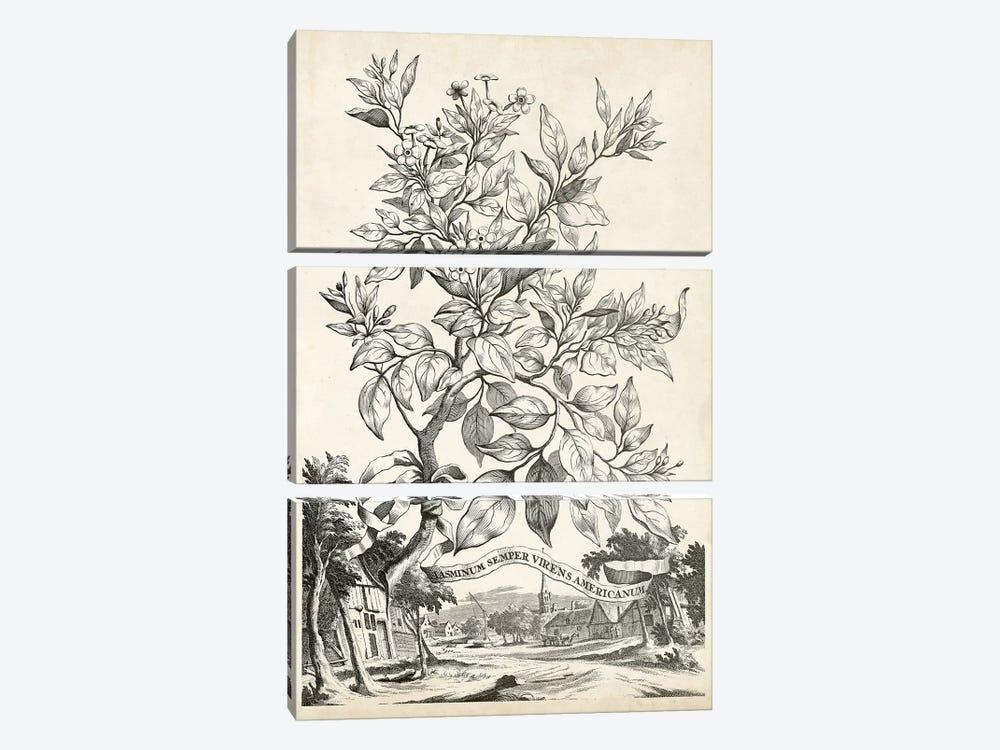 Scenic Botanical II by Abraham Munting 3-piece Canvas Art Print