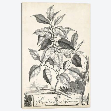 Scenic Botanical III Canvas Print #MUN3} by Abraham Munting Art Print