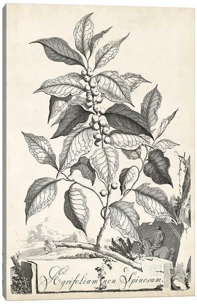 Scenic Botanical III Canvas Art Print