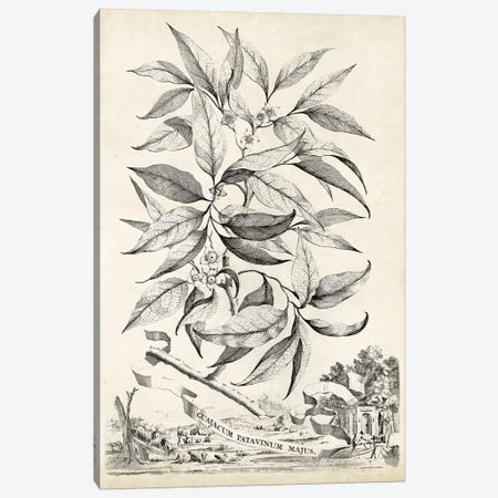 Scenic Botanical IV Canvas Print #MUN4} by Abraham Munting Canvas Art
