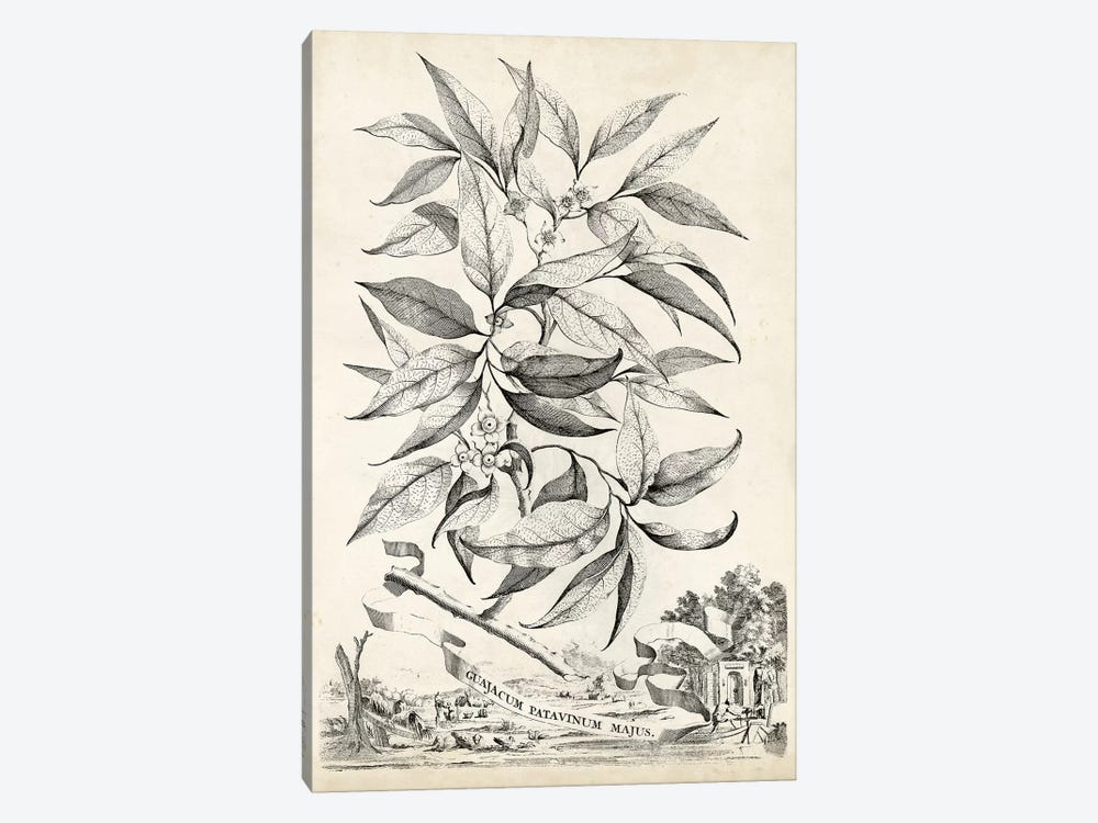 Scenic Botanical IV 1-piece Art Print