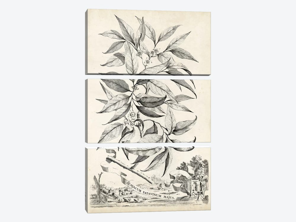 Scenic Botanical IV by Abraham Munting 3-piece Canvas Art Print