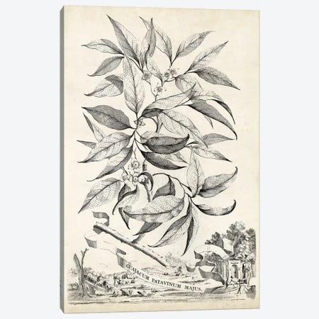 Scenic Botanical IV Canvas Print #MUN4} by Abraham Munting Canvas Art