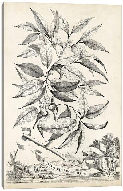 Scenic Botanical IV Canvas Art Print