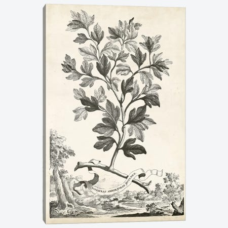 Scenic Botanical V Canvas Print #MUN5} by Abraham Munting Canvas Wall Art