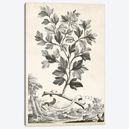 Scenic Botanical V Canvas Print #MUN5} by Abraham Munting Canvas Wall Art