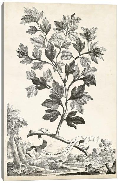 Scenic Botanical V Canvas Art Print