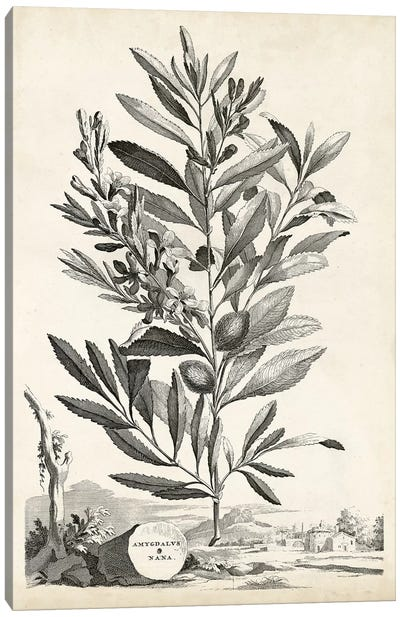 Scenic Botanical VI Canvas Art Print