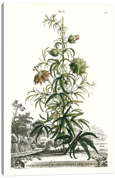 Garden Varieties I Canvas Art Print