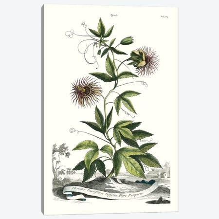 Garden Varieties II Canvas Print #MUN8} by Abraham Munting Canvas Print